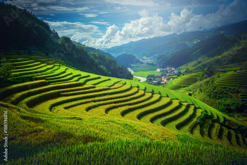 Fotobehang Rijstvelden Rice fields on terraced with pine tree at sunrise in Mu Cang Chai, YenBai, Vietnam.