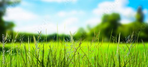 Poster Lime groen grashalme vor unscharfer Landschaft