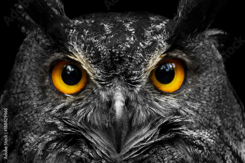 Staande foto Uil Black and white portrait owl with big yellow eyes