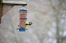 Bird Feeding In Snow.