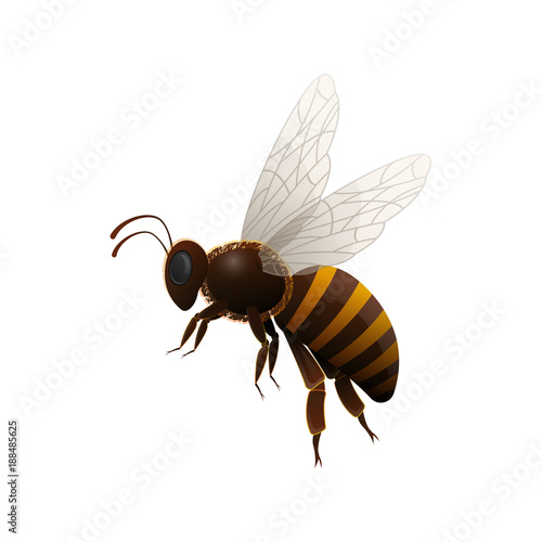 Striped flying honey bee side view isolated icon on white background Wallpaper Mural