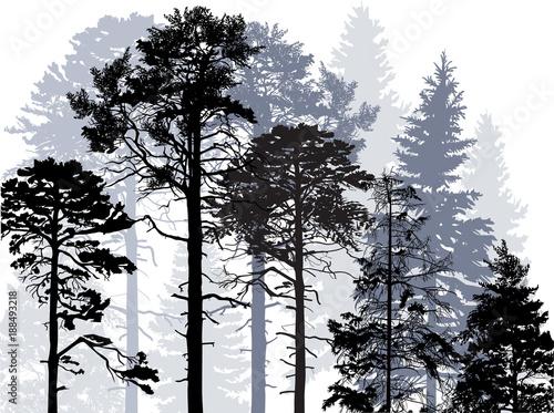 evergreen grey trees forest on white © Alexander Potapov