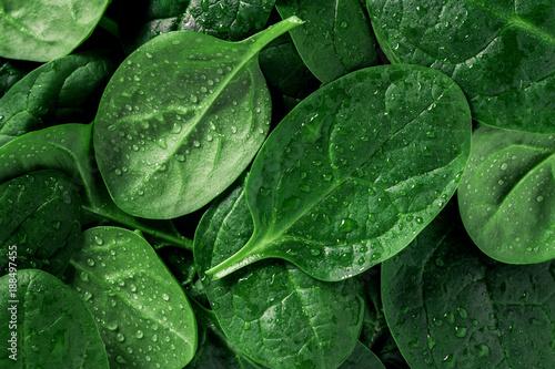 Türaufkleber Makrofotografie Macro photography of fresh spinach. Concept of organic food.