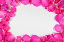The Pink Rose Petal Is Framed ...