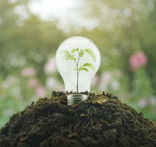Light Bulb With Small Plant Inside On Pile Of Soil Over Blur Pink Flower And Tree, Eco Concept