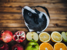 Guinea Pig Wants To Try Juicy ...