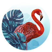 Flamingo Bird. Illustration Of...
