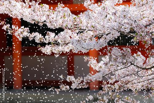 Tuinposter Kersenbloesem 神社の桜吹雪 京都
