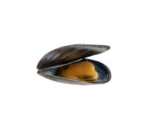 Opened Mussel On White Backgro...