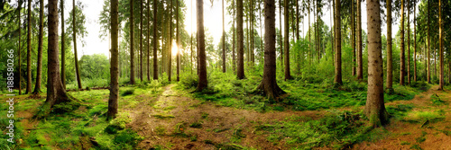 Foto op Canvas Bos Sunrise in a beautiful forest in Germany