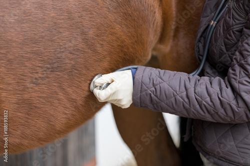 Fototapeta vet at work with stethoscope at a horse obraz
