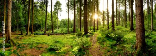 Fototapeten Wald Sunrise in a beautiful forest in Germany