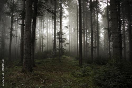Spoed Foto op Canvas Grijze traf. Majestic Forest