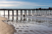A Lone Surfer Heading Out To Catch A Wave Near Pismo Beach Pier, Central Coast, California