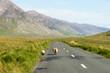 Una pecora ed il suo cucciolo sulla strada che attraversa il Con