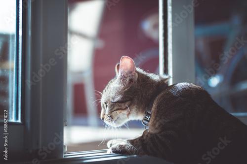 Fotografie, Obraz  Chaton qui guette à une fenêtre