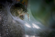 Spider Eating A Insect