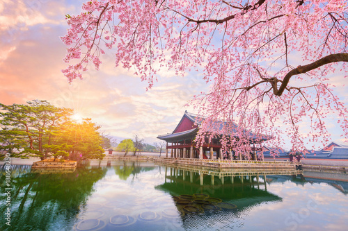 Fotografie, Obraz  Gyeongbokgung palace with cherry blossom tree in spring time in seoul city of korea, south korea