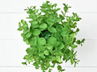 The green plant in pot