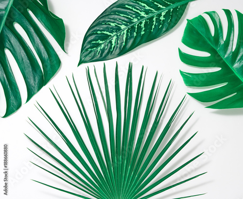 Nature Beach Leaves Background Tropical Fresh Palm Leaves Set Creative Green Summer Design Art Bright Summer Layout Minimal Detail Buy This Stock Photo And Explore Similar Images At Adobe Stock Trandy tropical leaves on turquoise slate background. adobe stock