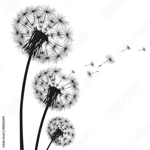 Fototapeta Silhouette of a dandelion obraz