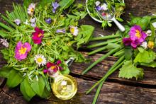 Frühlingssalat - Wildkräuter...