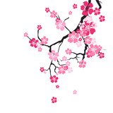Cherry Blossom Background Sakura Flowers Pink On Branch Flat Vector Illustration