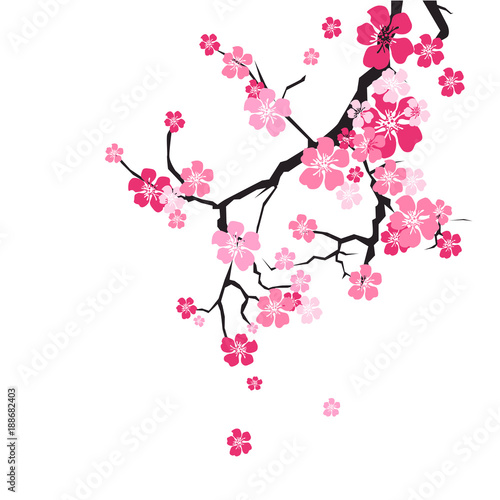 Photo  Cherry Blossom Background Sakura Flowers Pink On Branch Flat Vector Illustration