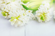 Beautiful Spring Flower Background White Hyacinths White Background Top View Spring Easter Holiday Card Copy Space