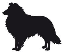Collie Herding Dog - Vector Bl...
