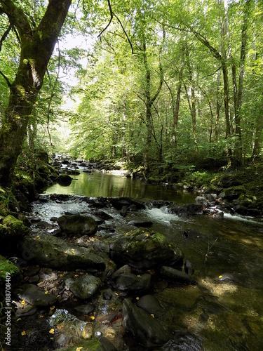 Fototapety, obrazy: Eau et nature