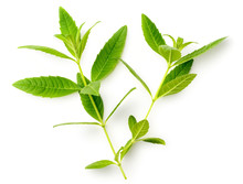 Fresh Lemon Verbena Leaves Iso...