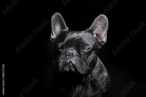 Fotobehang Franse bulldog Black French Bulldog with close eyes on the black background