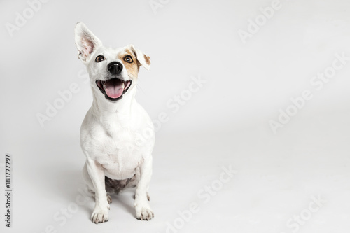 Foto op Canvas Hond The funny smiling dog
