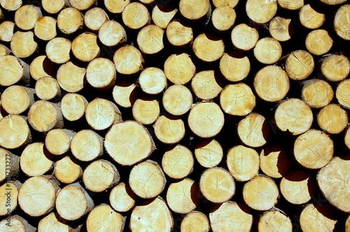 Fototapeta Bele drewna gotowe do tartaku ułożone w lesie obraz