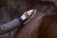 Grooming Horse Body