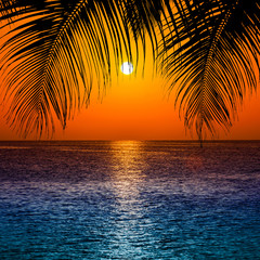 Obraz na Szkle Popularne Palm trees silhouette at sunset. sunset and beach. Beautiful sunset above the sea