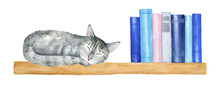 Wall Wooden Book Shelf With Little Gray Tabby Cat Taking A Nap And Row Of Reading Books. Blue, Pink, Grey Colored Covers. Cozy And Warm Decoration. Hand Drawn Graphic On White Background, Cut Out.