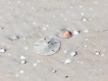 Sand Dollar On Sand Under Wate...