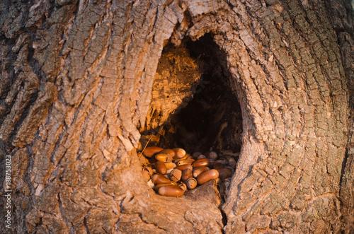 Fotografia Wydrążone w drzewie