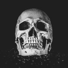 Scull In Black Background