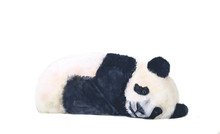 Watercolor Panda Sleep Isolate...