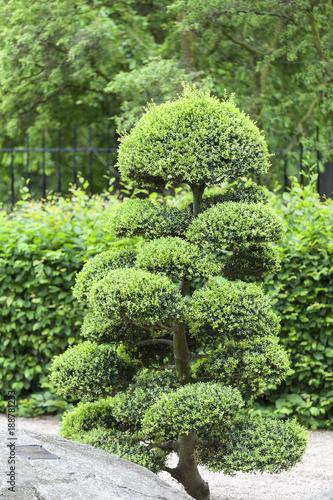 Printed kitchen splashbacks Garden Japanese Garden in summer, exotic plants, Wroclaw, Poland