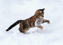 Graceful Spotted Cat Funny Fun...