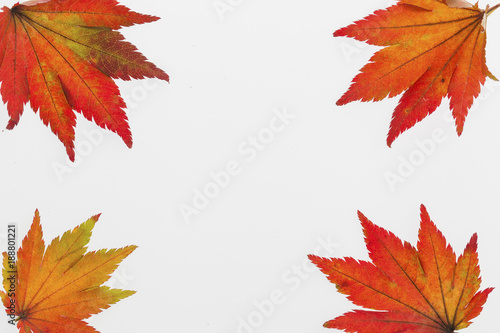 Fotografering  colorful autumn leaves