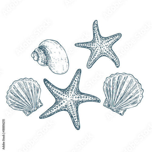 Photo Shells and starfish on white background, cartoon illustration