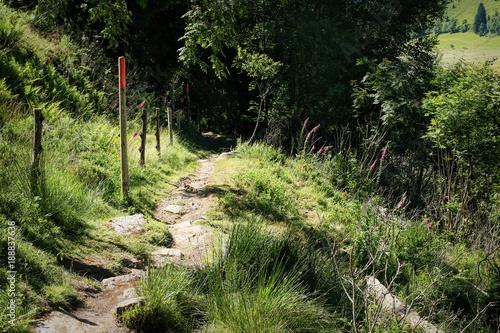 Spoed Foto op Canvas Grijze traf. Lovely hiking path called