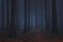 Dark And Scary Fantasy Dreamy Forest