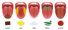 Tongue With Five Taste Areas S...