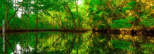 zielone-drzewa-namorzynowe-odbite-w-wodz